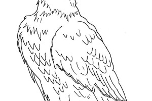 Eagle coloring pages - Bird coloring pages - animals coloring pages - #11