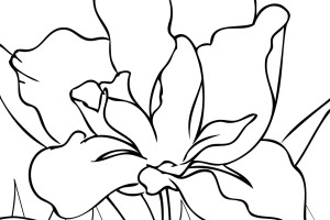 Flowers coloring pages | color printing | Flower | Coloring pages free | #65