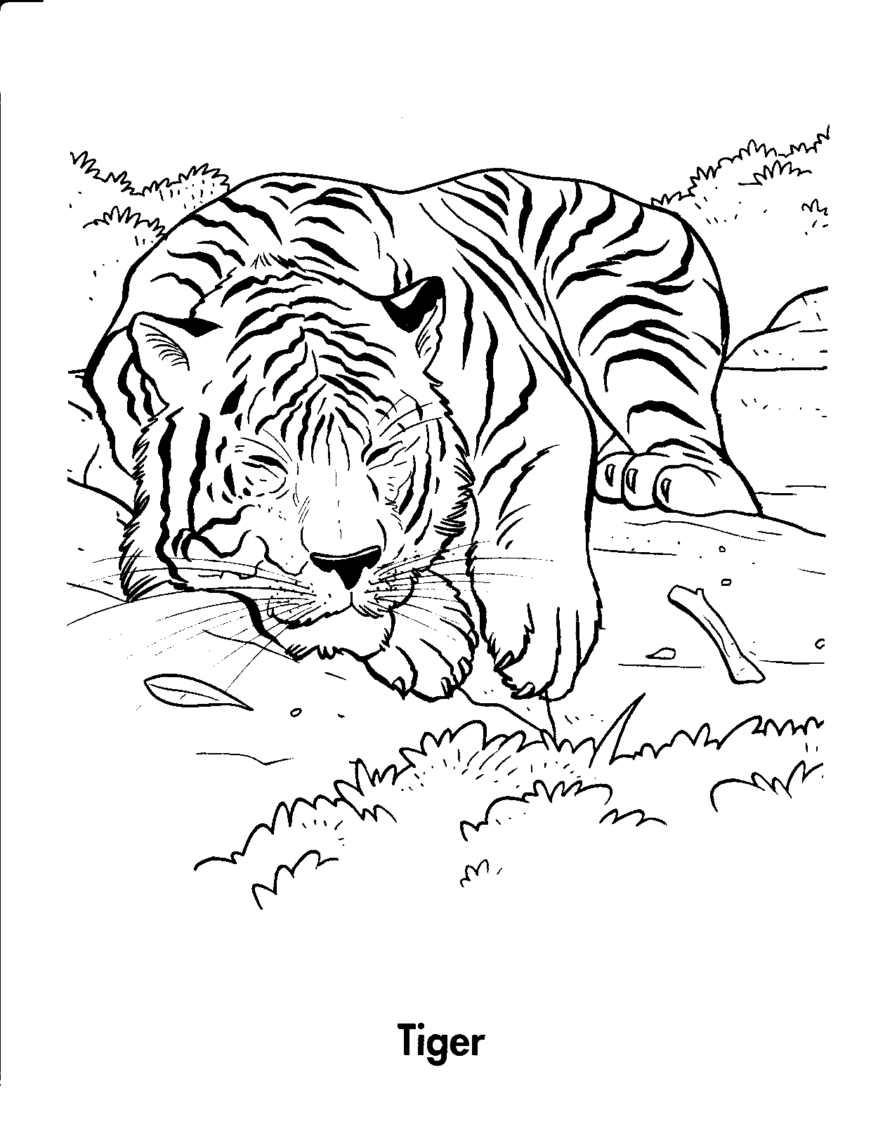 Tiger coloring pages   Animal coloring pages   #32